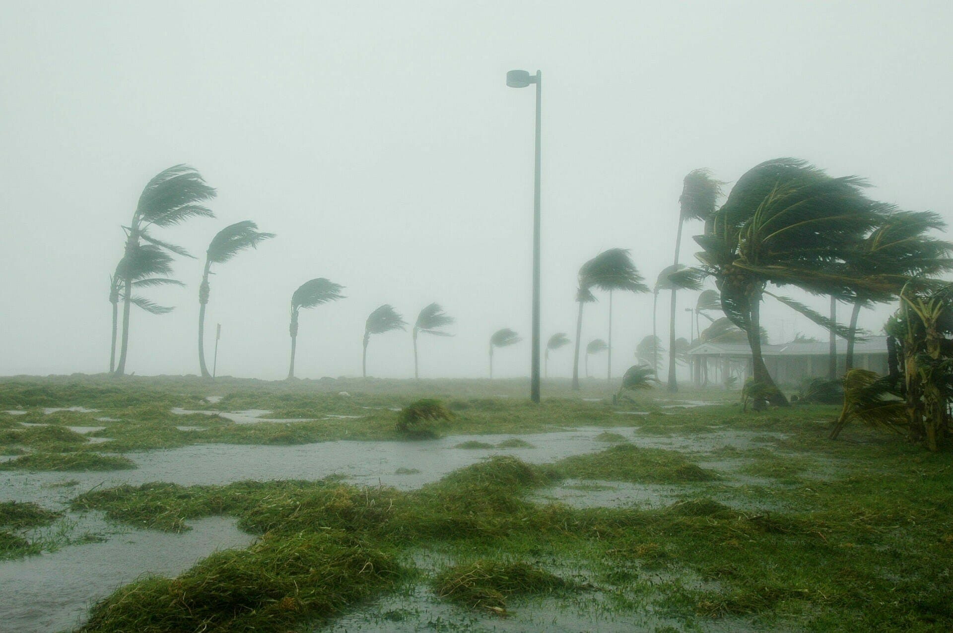 Hurricane and High Winds on trees outside